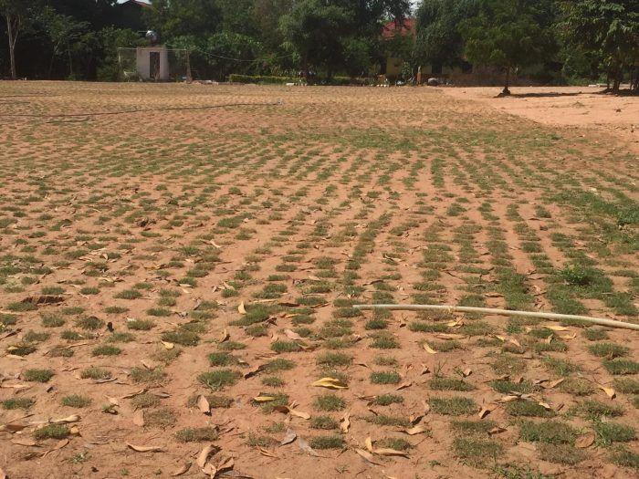 Le gazon est planté sur le terrain de foot du Centre ©Hélène de G.