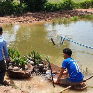 De nombreux jeunes sont retournés aider leurs parents dans les rizières