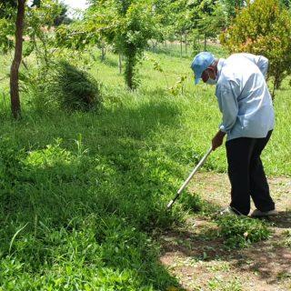 Un homme travaillant dans la rizière au Cambodge
