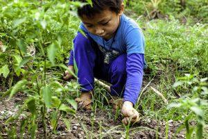 Enfant dans un champ à Luang Prabang au Laos