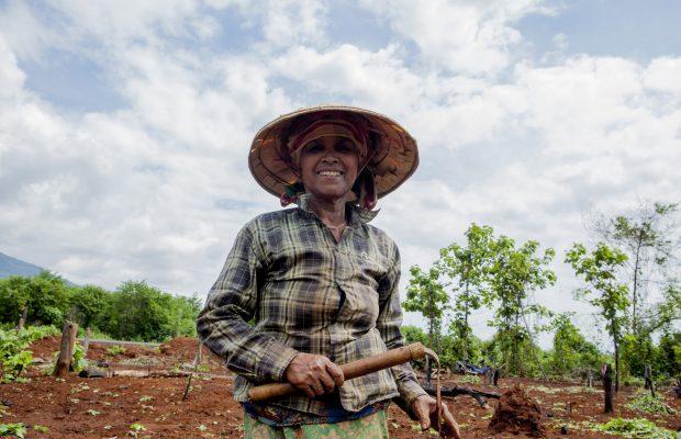 Femme dans un champ à Luang Prabang au Laos