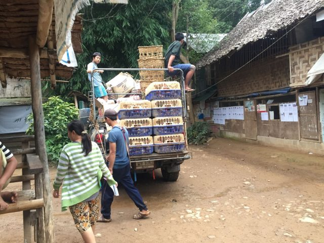 Livraisons de poules dans le camp de Mae Rae Moe